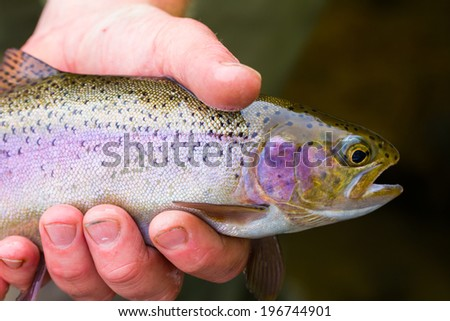Fly fisherman holding a trophy redside rainbow trout native to the Deschutes River in Oregon. - stock photo