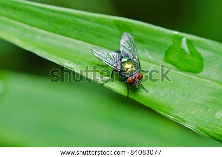 fly in green nature or in the city - stock photo