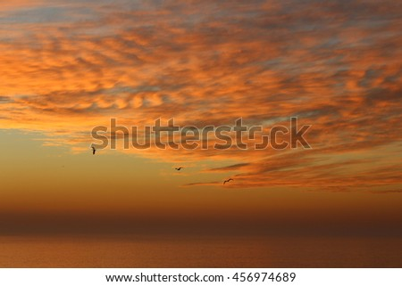 fly in the sky - stock photo