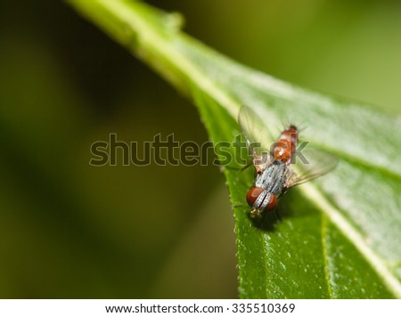 Fly insect close up in the nature