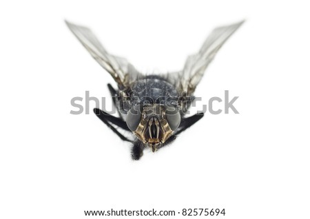 Fly Insect Extreme Macro Shot - stock photo