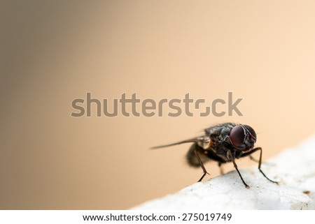 Fly insect macro photography - stock photo