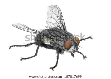 Fly isolated on the white background - stock photo