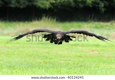 fly like an eagle - stock photo