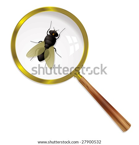 Fly magnified under a glass with wings and body