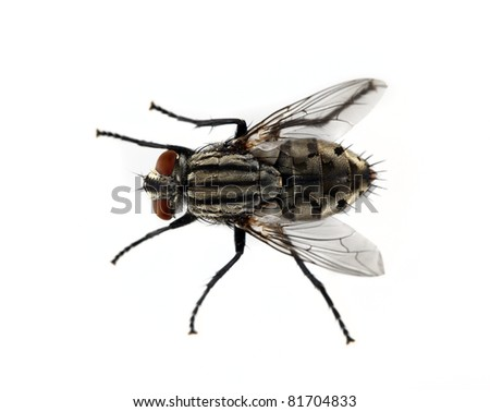 Fly on a solid white background. - stock photo