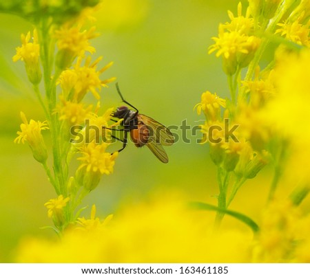 fly on a yellow flower - stock photo