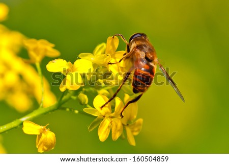 Fly on a yellow flower on blurred background