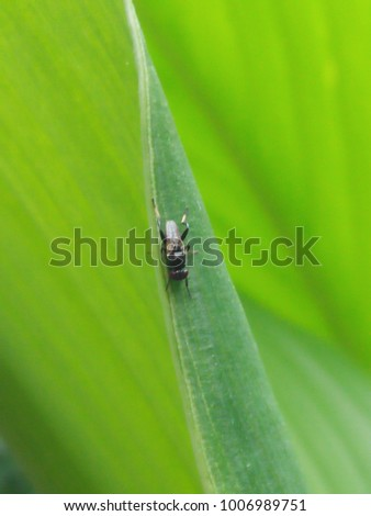 fly on green leaf