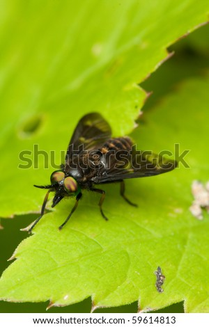 Fly on green leaf in nature close up