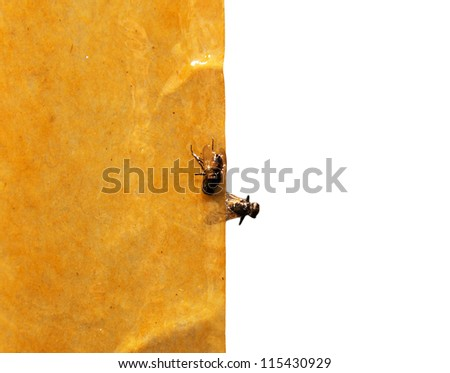 fly on the adhesive tape - stock photo