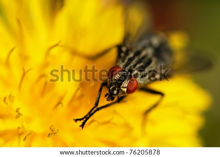Fly on the dandelion - stock photo