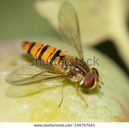 fly on the wild nature - stock photo