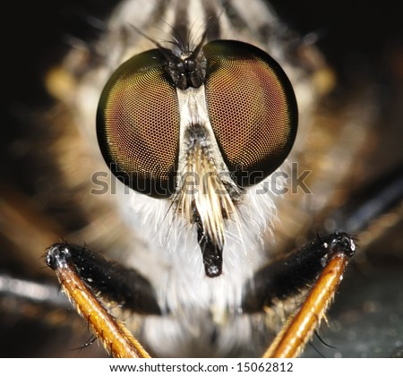 Fly portrait - stock photo
