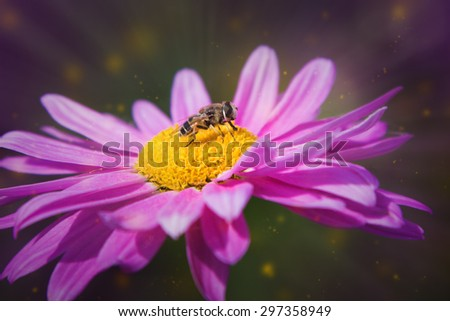 Fly sitting on a flower. - stock photo