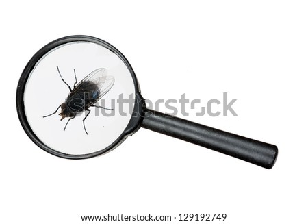 Fly under real magnifying glass - macro