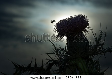 Fly using thistle at sunset - stock photo