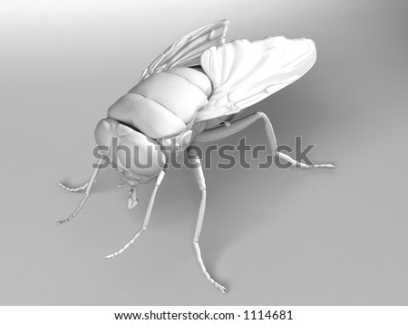 fly white on white - stock photo