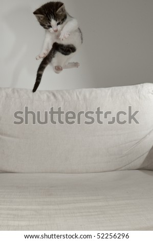 flying baby cat over white pad - stock photo