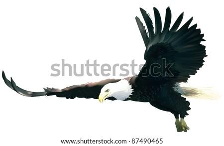 Flying Bald Eagle - stock photo