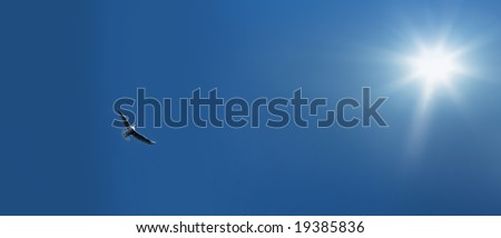 flying bird over clear sky and the sunlight - stock photo
