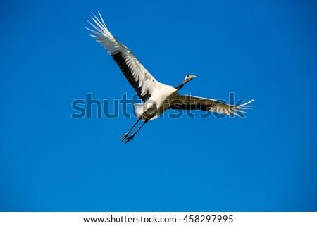 flying birds - stock photo