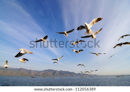 Flying birds in blue sky - stock photo