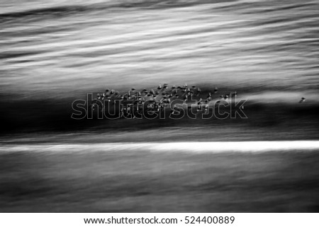 Flying birds in nature. Abstract Motion Blur Background