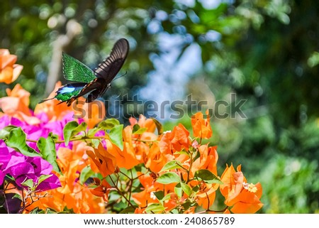 Flying Butterfly over colorful flower - stock photo