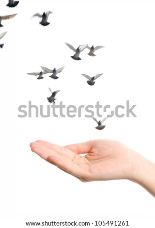 flying dove with open hand isolated on white freedom concept background - stock photo