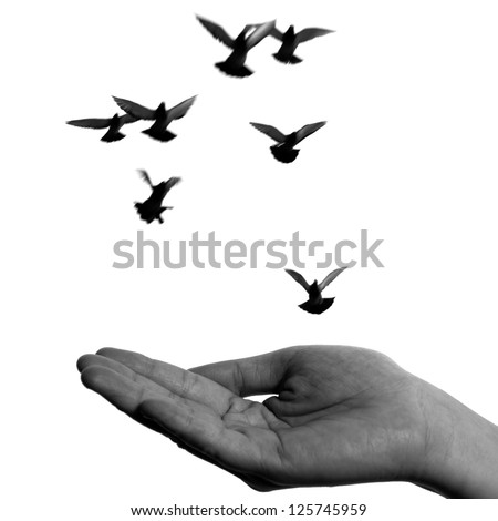 flying dove with open hand isolated on white freedom concept black and white - stock photo