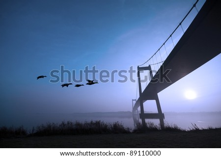 Flying ducks and blue bridge - stock photo