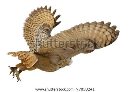 Flying eagle  owl bird isolated on white background - stock photo