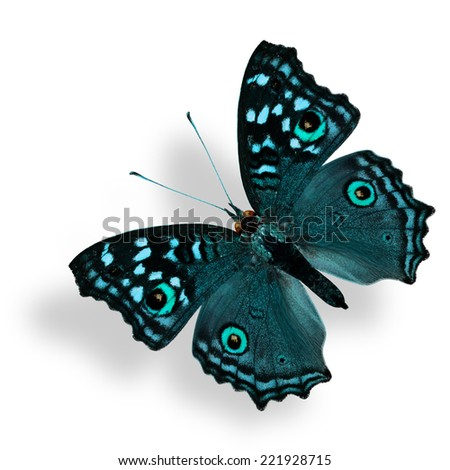 Flying Fancy Light Blue Butterfly (Grey Pansy) isolated on white with soft shadow beneath - stock photo