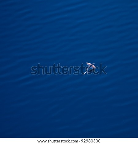 Flying fish gliding above the water surface. - stock photo