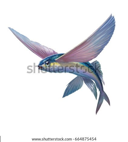 Flying fish jumping flying on white stock illustration for Flying fish images