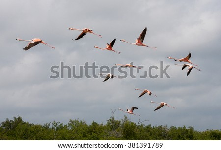 flying flamingos against cloudy sky