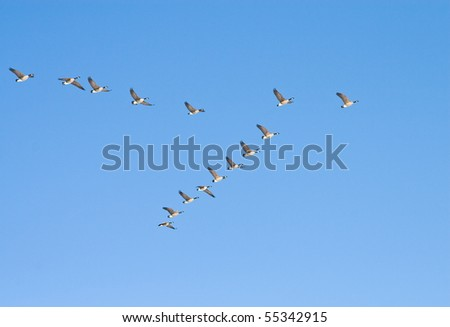 Flying geese in v shape