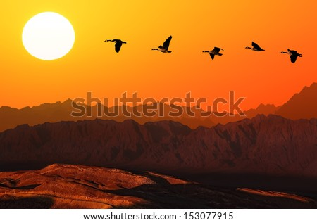 Flying geese over mountain on the orange sunset background  - stock photo