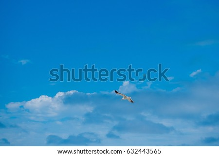 flying gull, bird, with beautiful cloudy blue sky in the background in the bright summer day