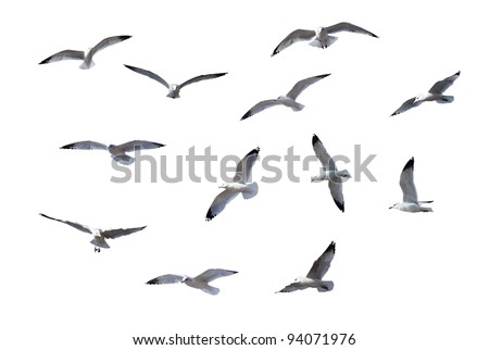 Flying Gulls isolated on white background - stock photo
