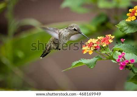 flying hummingbird on little flowers San Diego California