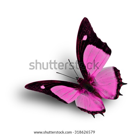 Flying Indian Nawab butterfly in fancy pink color profile on white background with soft shadow beneath - stock photo