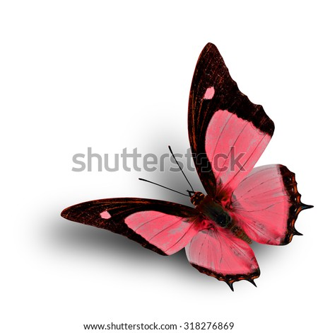 Flying Indian Nawab butterfly in fancy red color profile on white background with soft shadow beneath - stock photo