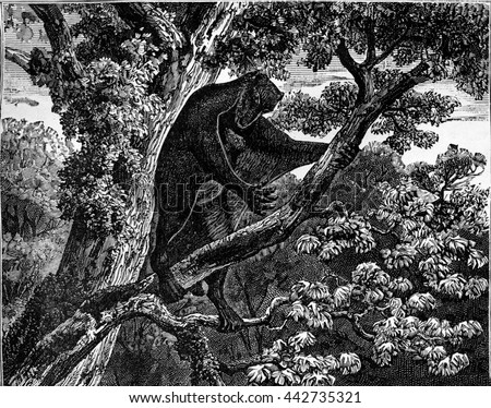 Flying lemur from the Eocene period. From The World Before Man, vintage engraving, 1880. - stock photo
