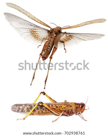locust dating site The black locust the black locust  brides intergalactic dating agency the innocent a ryan lock  black site dearest ivie a novella set in the black dagger.