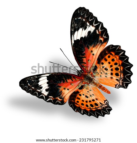 Flying Orange Butterfly (Leopard Lacewing) on white background with soft shadow - stock photo
