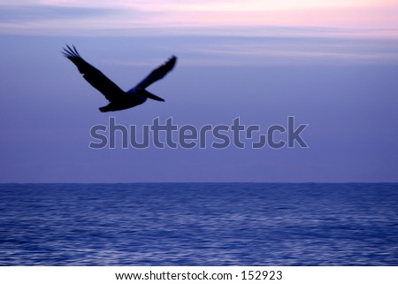 Flying over the blue ocean (exclusive at shutterstock) - stock photo