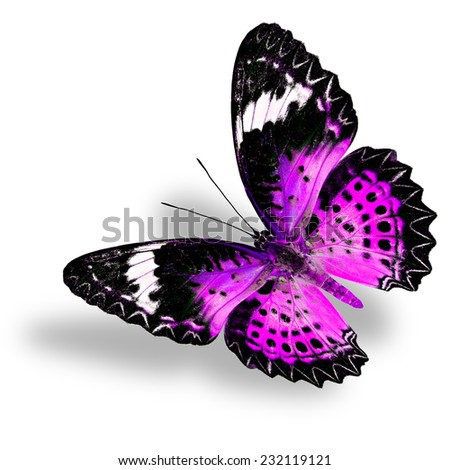 Flying Pink Butterfly (Leopard Lacewing) on white background with soft shadow - stock photo