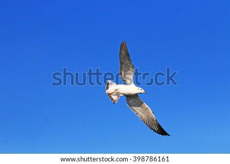Flying sea gull - stock photo